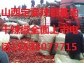 山西定襄大量供北京红油椒二荆条等干红辣椒