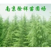 南京徐祥苗圃场