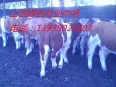 山西供西门塔尔利木赞肉牛高产奶牛