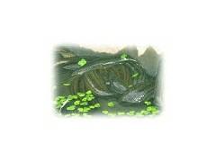 水蛭种蛭供应