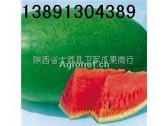 陕西西瓜产地价格\特大新红宝西瓜批发\绿皮新红宝西瓜销售行情
