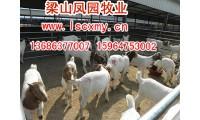 山东梁山县畜牧局凤园牧业牛羊繁育基地