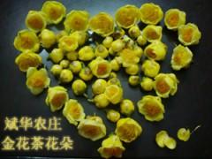 供多种规格的金花茶苗、盆景、嫁接枝和扦插枝条