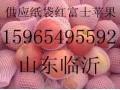 供应山东纸袋膜袋红富士苹果