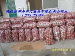 陕西冷库红富士苹果价格陕西纸袋膜袋冷库红富士苹果种植基地