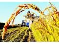 三农政策事关中国现代化的成败