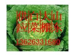 山东大白菜价格13626331680山东大白菜种植供应基地
