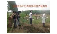 新乐市冠源生猪养殖专业合作社