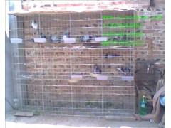 鸡鸽兔笼狐狸笼鹌鹑笼貉笼肉兔笼母兔笼獭兔笼鸽子笼蛋鸡笼雏鸡笼
