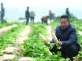 朱席武:今年,我要把蔬菜种到非洲去