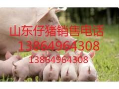 山东仔猪交易市场