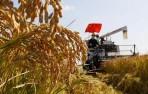 双季稻全程机械化技术