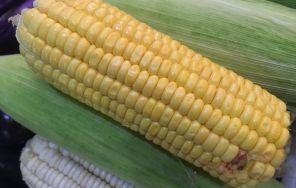 玉米秃尖缺粒的防治