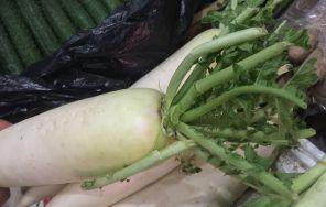 优质白萝卜巧栽培