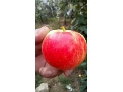 今日新红星红将军苹果上市批发价格便宜什么地方有苹果