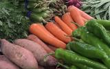 大棚蔬菜种植技术