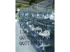 鸡鸽兔笼五金丝网鸡笼鸽笼兔笼狐狸笼鹌鹑笼宠物笼运输笼养殖笼具