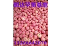 山东条纹红富士苹果批发价格