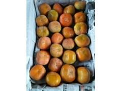 陕西柿子行情,金钱柿子批发,八月黄柿子基地,水果柿子价格