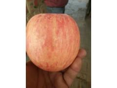 水晶红富士苹果价格行情,陕西冷库洛川红富士批发价格