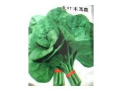 保健蔬菜种苗 木耳菜种子
