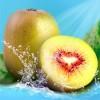 蒲江红心猕猴桃 红心猕猴桃好吃 蒲江红心猕猴桃哪家好 果堡供