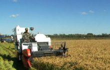 倒伏小麦收割机如何收割