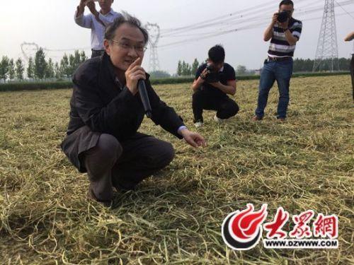 盛亦兵:一棵草助农增收10亿元