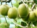 发展循环经济助力特色种养实现农民增收致富