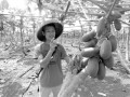 生态农业诱惑大 雷州小伙回乡种木瓜
