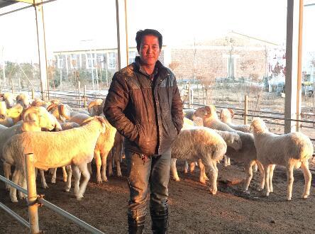 """贫困户当上""""羊老板"""" 京东金融助力精准扶贫让乡村更美丽"""